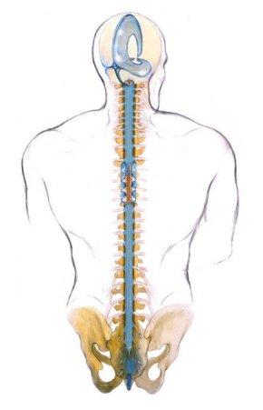 craniosacral-spine